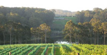 TILBA VALLEY WINERY – Your Sunday Best!